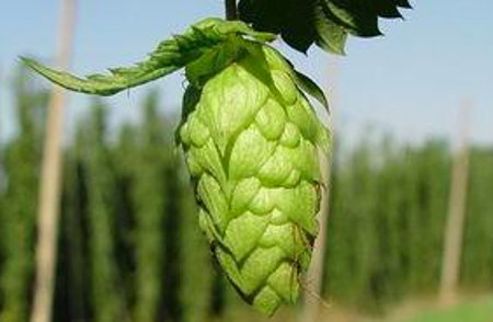 Picture for category India Pale Ale (IPA)